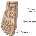 Random image: metatarsal-phalangeal-joint