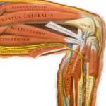 Random image: quadriceps