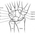 Random image: wrist-bones
